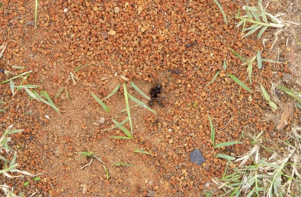 hangyák, nagy részünk a föld alatt lehet